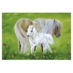 Carte postale Le poney fée de Sandrine Gestin
