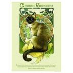 Affichette de chat de Séverine Pineaux, Charah Bernardt, de la collection Histochats