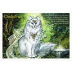 Chaladriel, carte postale de chat de Séverine Pineaux, coll. Chats de la littérature