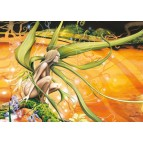 Fée à la rivière d'Or..., carte postale féerique de Brucero